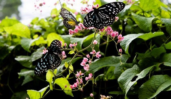 Spring Gardening How To Build a Butterfly Garden