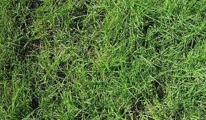 how to seeding overseeding sodding guide