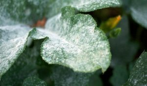 How to Decrease Risk of Fungal Disease in the Garden