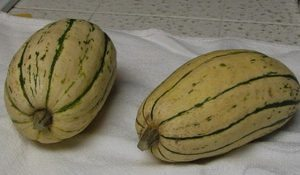 How to Transplant Melons and Squash into the Outdoor Garden