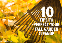 10 tips perfect fall garden cleanup
