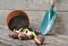Is it too Plant Bulbs in the fall
