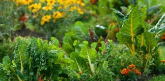 how to overwinter your spring veggies