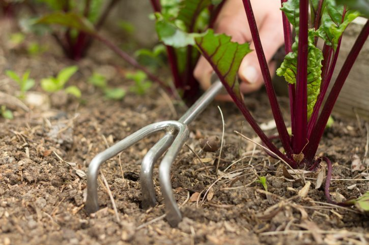 gardening lingo weeding