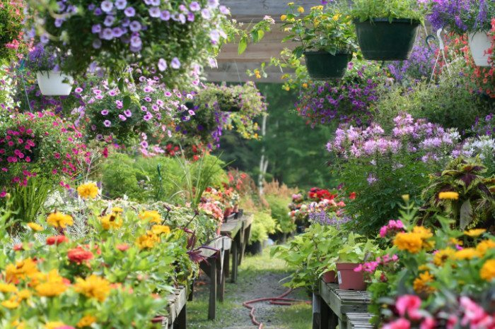 healthy plants in nursery