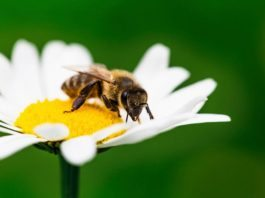 attract animals to your garden