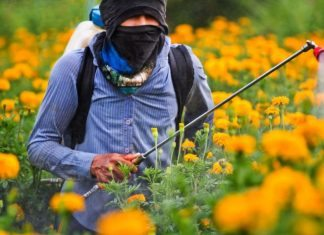 side effects from weed killers
