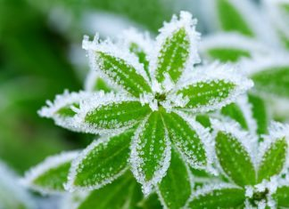 Preparing Your Garden for Frost