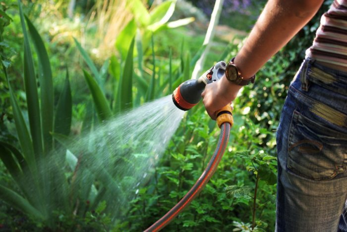 Best Time to Water Your Garden