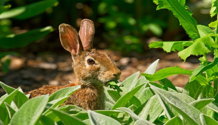 How to safely keep rabbits out of the garden gracious - How to keep rabbits out of a garden ...