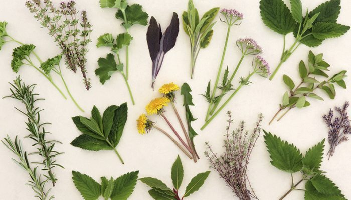 4 medicinal plants and herbs you can actually grown - Medicinal herbs harvest august dry store ...