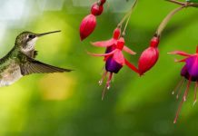 attract birds to garden
