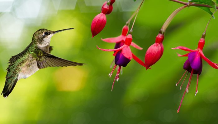 attract wildlife to garden