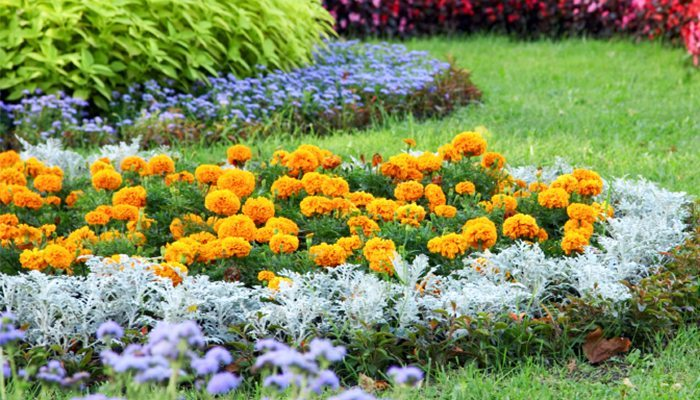 3 easy care flower bed ideas for Easy to care for outdoor flowering plants