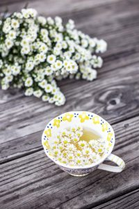Daisy Facts: Daisy herbal tea.
