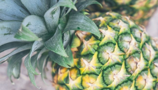 how to grow pineapples gracious gardening. Black Bedroom Furniture Sets. Home Design Ideas