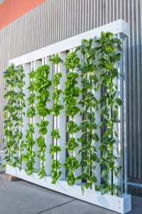 Vertical vegetable indoor garden